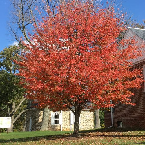 Historic Guinston in the Fall